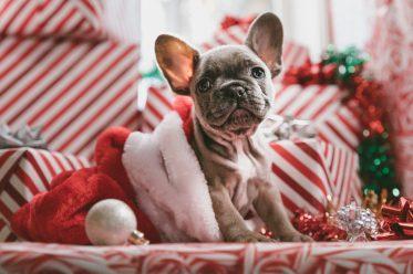 Hundewelpe zwischen Geschenken - Top Weihnachtsgeschenke 2018